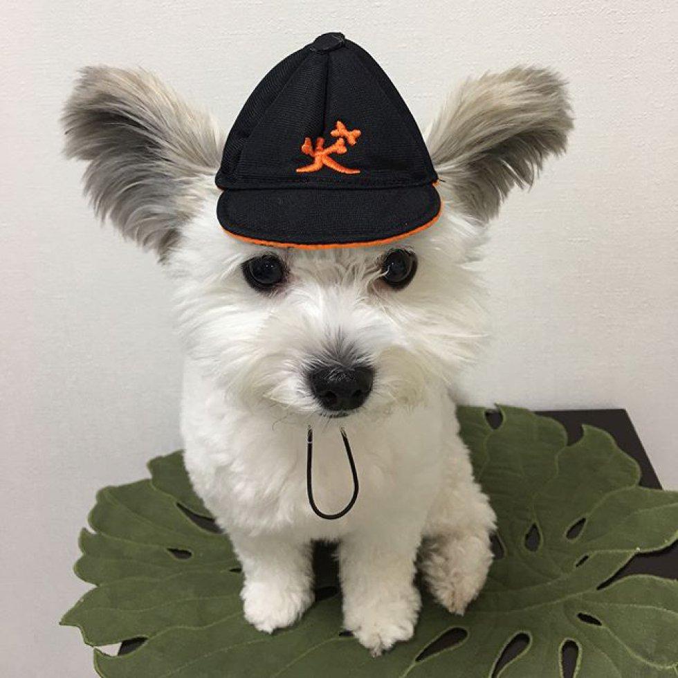 Картинки по запросу собака гома