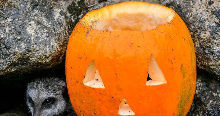 """#Halloween2020: """"El mundo de los muertos y de lo macabro es parte nuestra, no es algo que tengamos que esconder"""""""